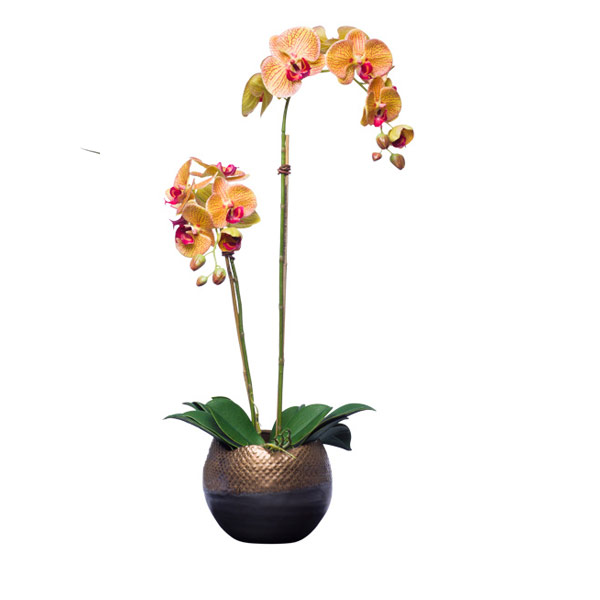 MV/YL PHALS X 2 IN BRONZE VASE
