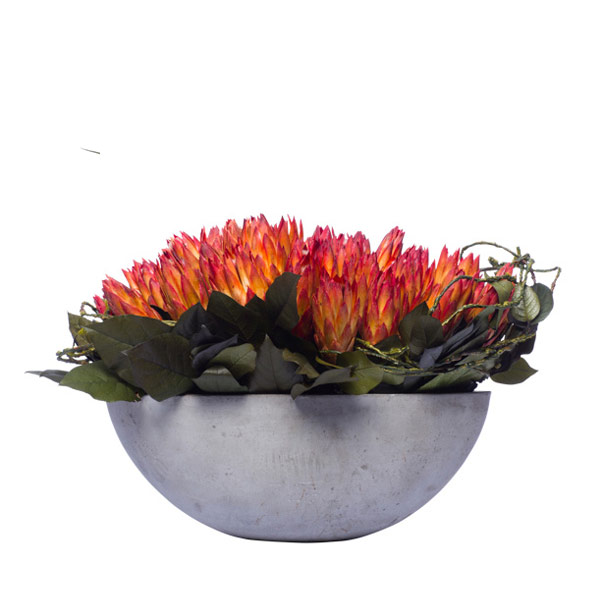 RED REPENS PROTEA IN OVAL BOWL