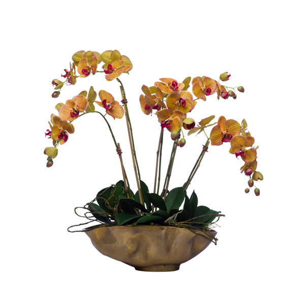 MV/YL PHALS IN GOLD OVAL BOWL