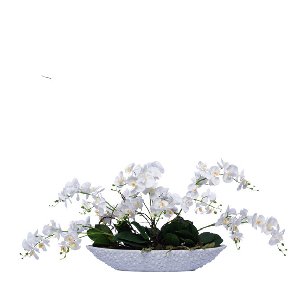 WHITE WILD MINI PHAL/OVAL BOWL