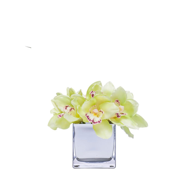 GREEN CYMBIDIUM IN MIRROR CUBE