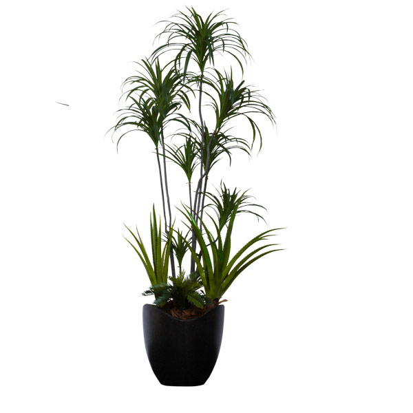 6' DRACENA COMBINATION/BASKET