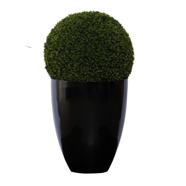 3.5' MINI BOXWOOD BALL IN BLACK POT