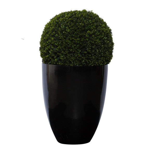 3' MINI BOXWOOD BALL IN BLACK POT