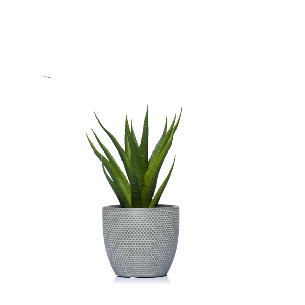 ALOE IN A GREY POT