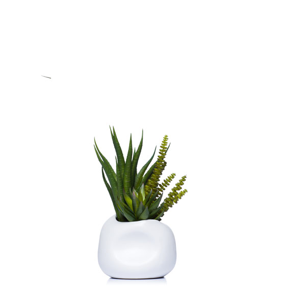 Set of Two Succulents in White Dented Pots