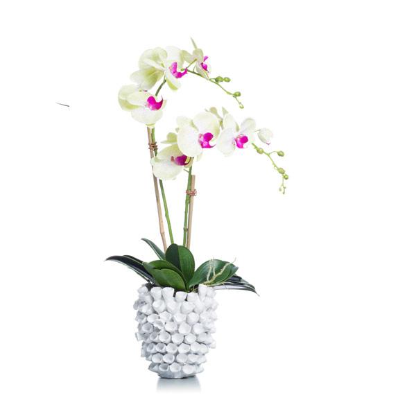 Green Phal In Barnacle Vase