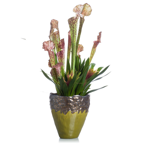 Bromilliad & Cobra lily in Green / Bronze Vase