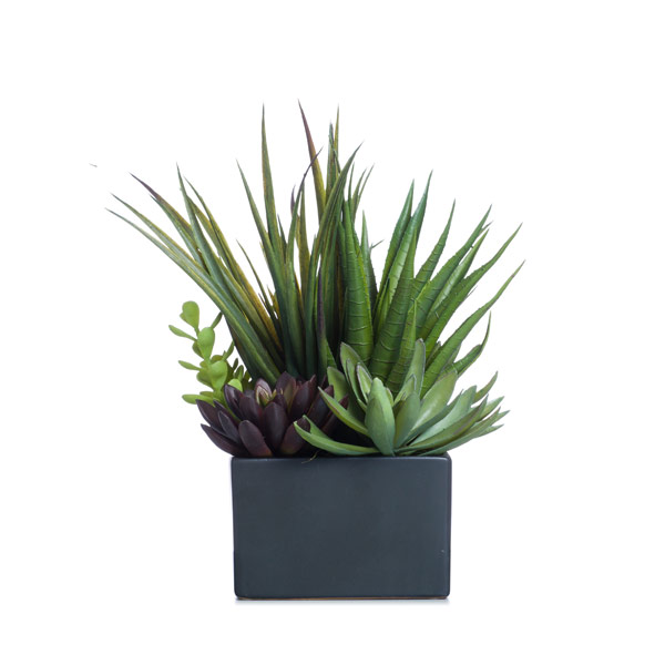 Succulents in a Black Square
