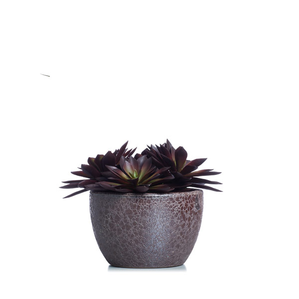 Burgandy Succulent in a Brown Pot