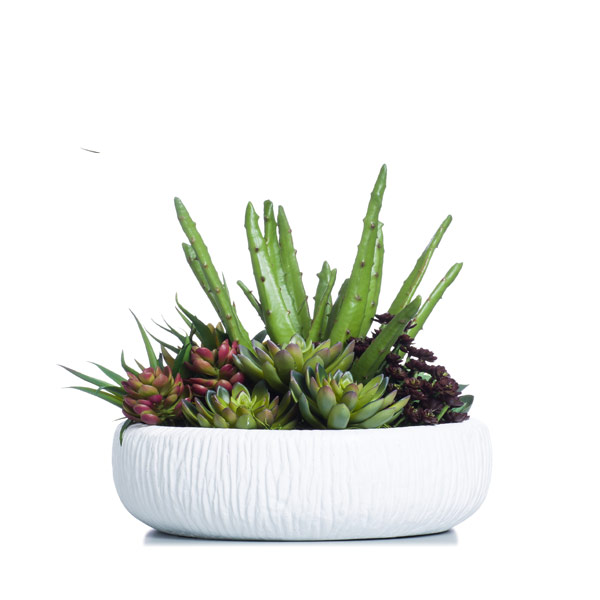 Succulent in a White Container