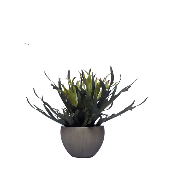 STAGHORN IN MEDIUM GREY POT