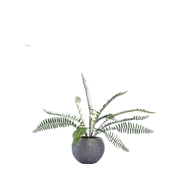 SM WOODLAND FERN IN GREY POT