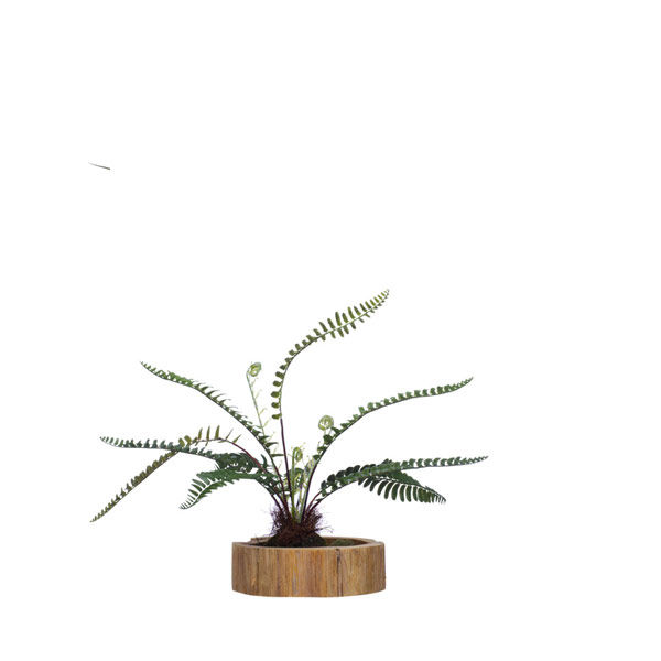 SM WOODLAND FERN IN WOOD BASE
