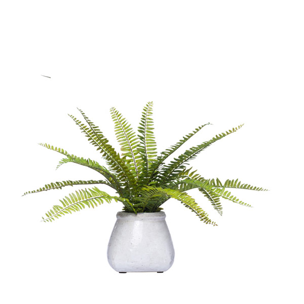 BOSTON FERN IN STONE POT