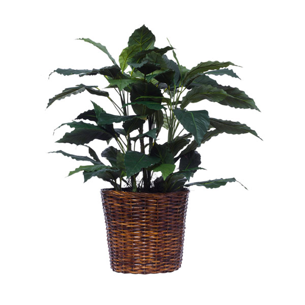 LARGE SPATH PLANT BASKET