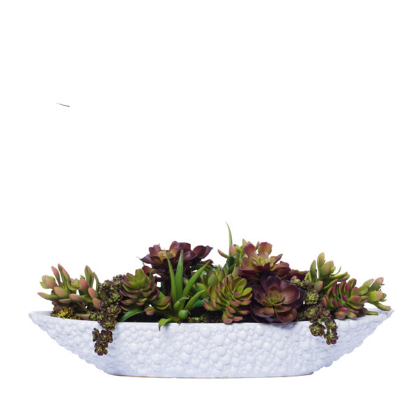 SUCCULENTS IN WHITE OVAL BOWL