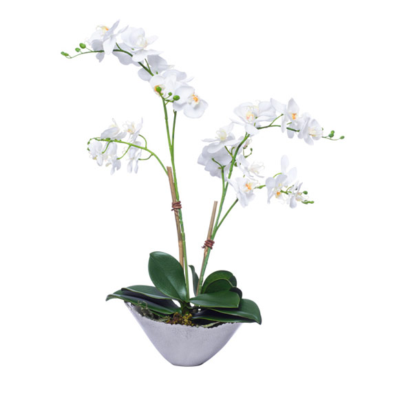 DBL MINI WHITE PHAL IN SILVER BOWL
