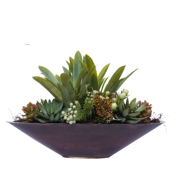 SUCCULENTS IN BROWN BOAT