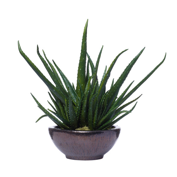 ALOE IN SM LAVA BOWL
