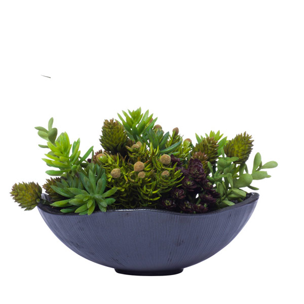 MINI SUCCULENTS IN BLK WAVY BOWL
