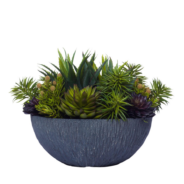MIXED SUCCULENTS IN BLACK BOWL