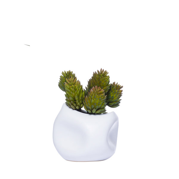 CONE SUCCULENT IN WHITE DIMPLE POT