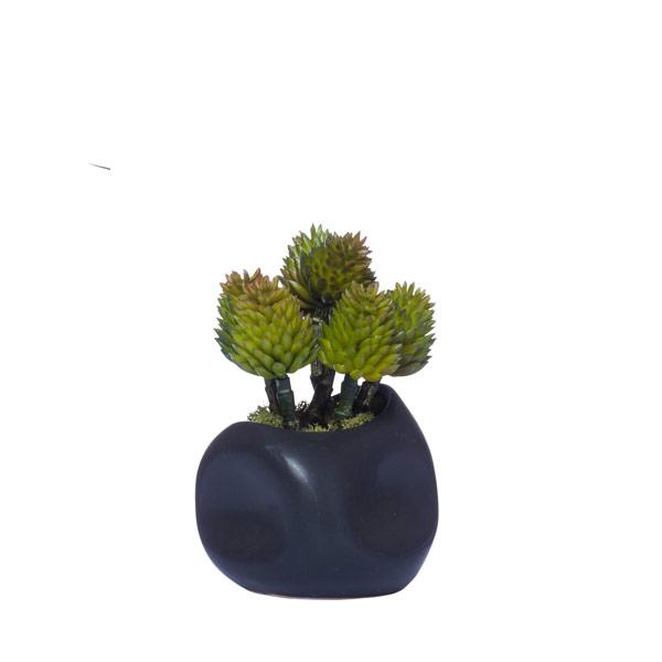 CONE SUCCULENT IN BLACK DIMPLE POT