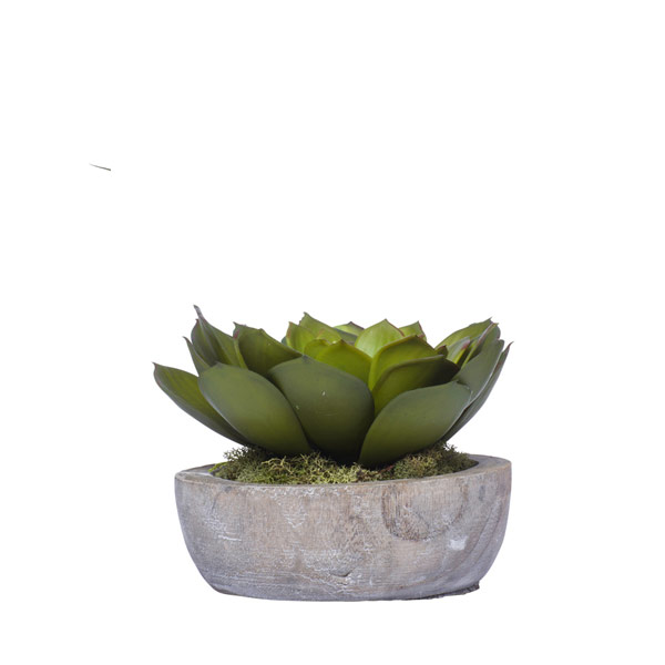 ECHEVERIA IN WOOD BOWL