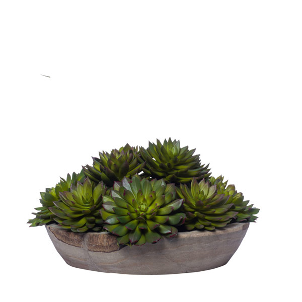 MIXED ECHEVERIA IN GREY TONE BOWL