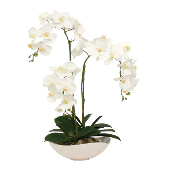 White Phalaenopsis in a White Wavy Container