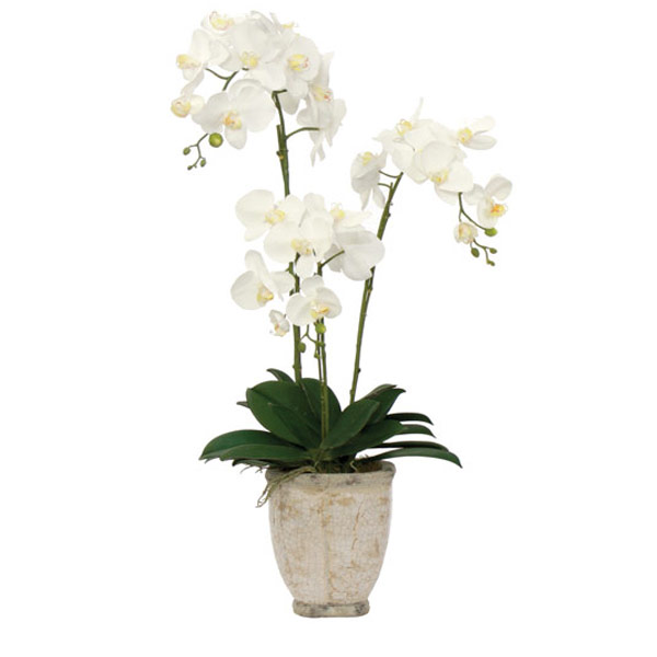 White Phalaenopsis in a White Glaze Pot