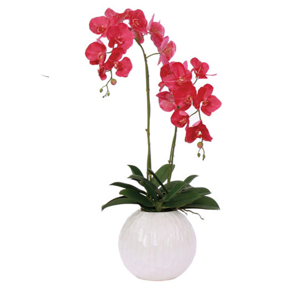 Fuchsia Phalaenopsis in a White Ball Container