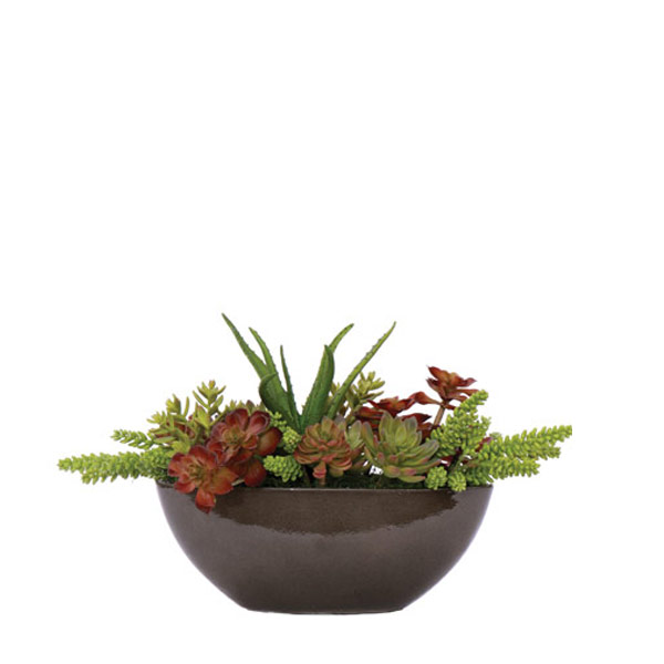 Large Mixed Succulent Garden in Black Oval Container