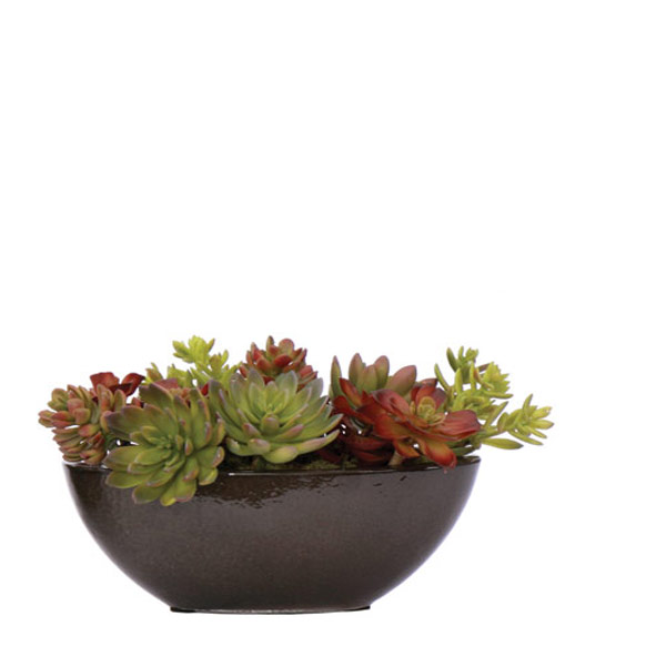 Small Mixed Succulent  in a Black Oval Container