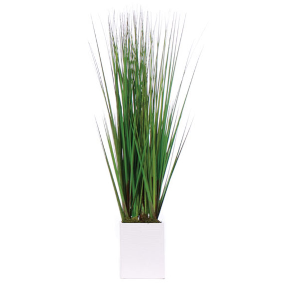 Grass in a Tall White Rectangle
