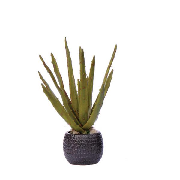 Aloe in a Black Pot