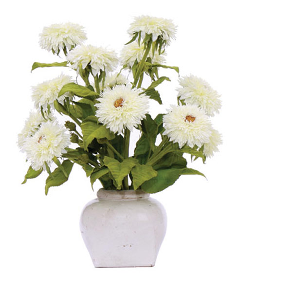 Large White Sunflower in a White Pot