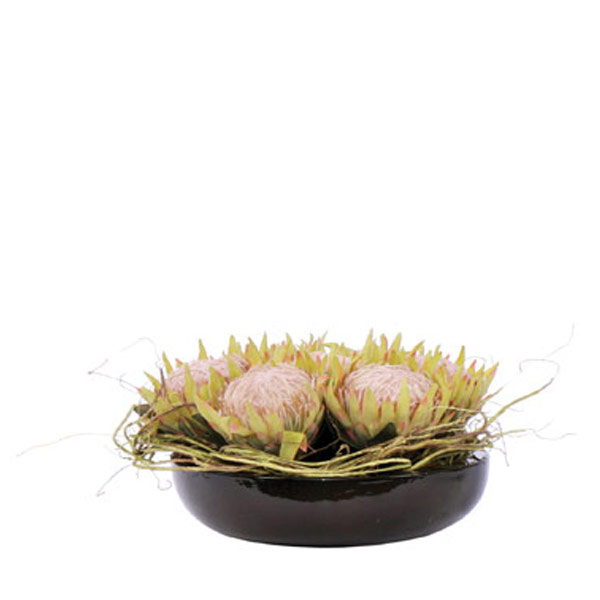 King Protea in a Black Bowl