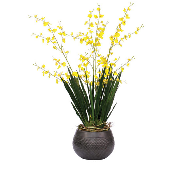 Yellow Oncidium in a Black Dimple Pot
