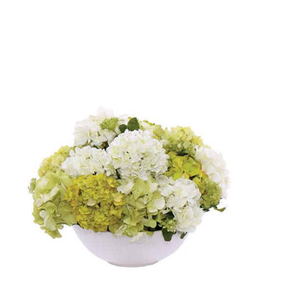 Hydrangea in a Large White Bowl
