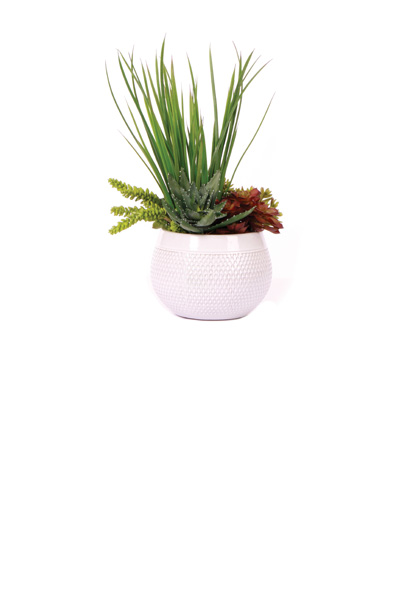 Yucca / Succulents in Shiny White Pot
