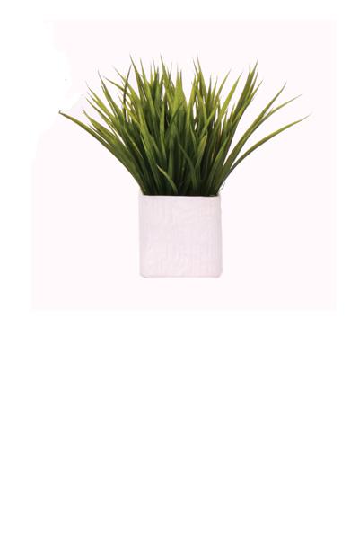Grass in a White Ceramic