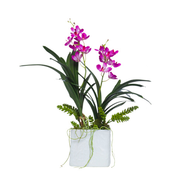 Double Fuchsia Vanda in Lg. Square White Container