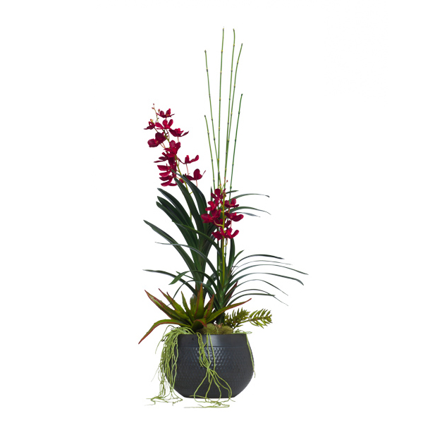 Red Vanda in Black Dimple Pot