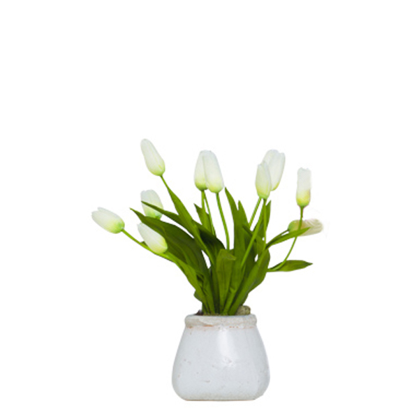 White Small Bud Tulips in Stone Pot
