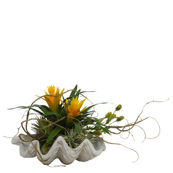 Bromeliads in Clam Shell
