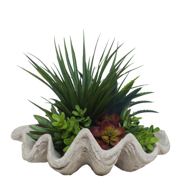 Bromeliad/Succulent in Clam Shell