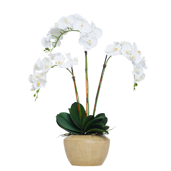White Phalaenopsis in UFO Bowl