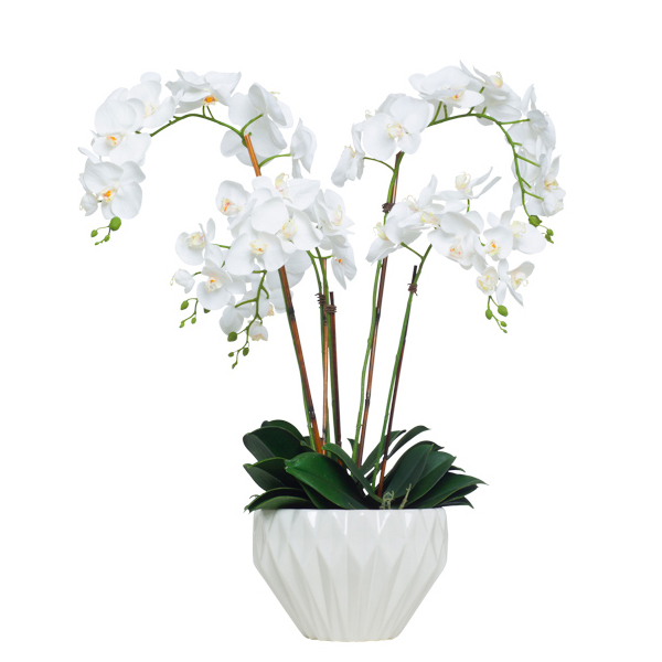 White Phalaenopsis in Copped Pot